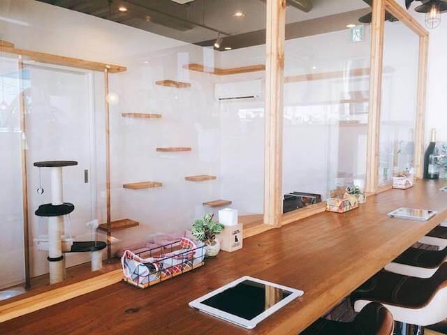 カフェスペース側からガラス越しに見たキャットルーム
