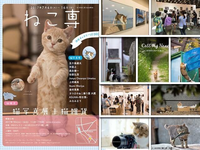 五十嵐健太さん主催、11名の作家によるグループ写真展「ねこ専」