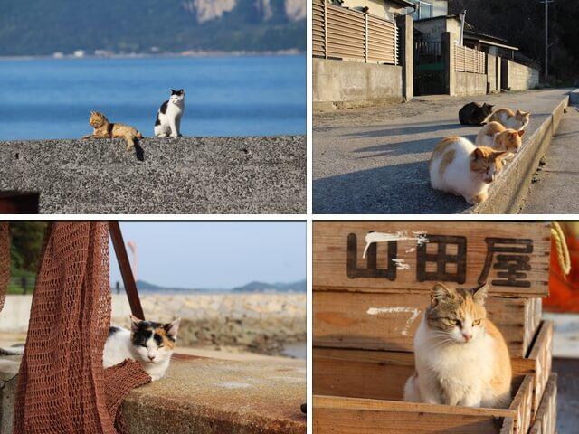 全国にある10の猫島を現地取材した書籍「にっぽん猫島紀行」