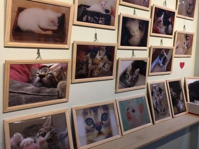仔猫の写真展「こにゃんこ展」が開催中。チャリティー販売もあるニャ
