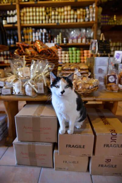 「恋する猫さんぽ」の収録ネコ写真、看板猫