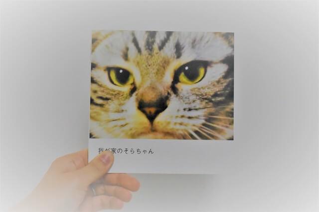 しまうまプリントで作成した猫のフォトブック(表紙)