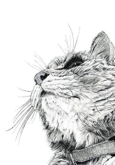 山田貴裕氏が白黒ペン画で描いた猫の絵