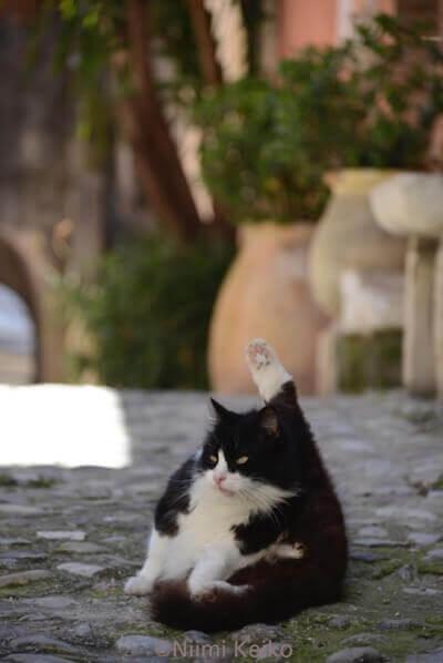「恋する猫さんぽ」の収録ネコ写真、白黒猫