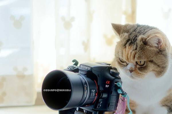 おっさんぽ@猫部のjunya ossanpo umetsu氏の作品、カメラを構える猫