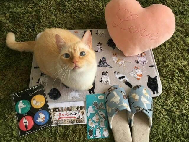 3COINSの「きゅんネコ」グッズと猫