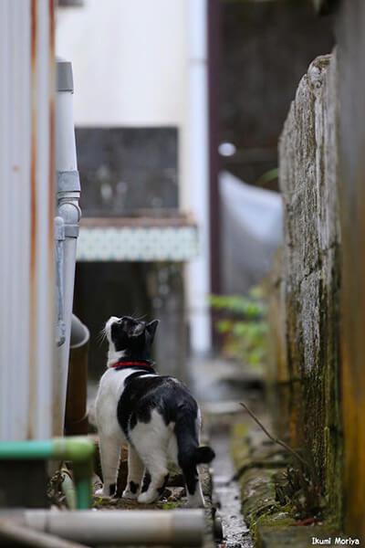 守屋育実(Ikumi Moriya)さんの作品、黒白の野良猫