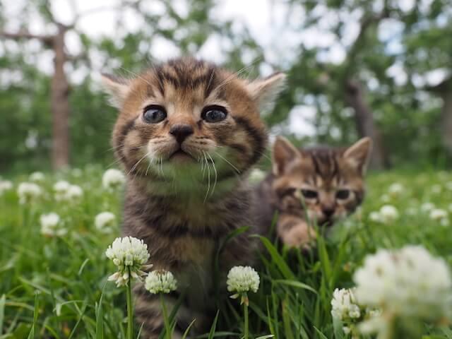 劇場版「岩合光昭の世界ネコ歩き」コトラとその家族