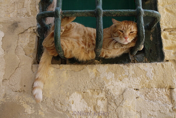 「恋する猫さんぽ」の収録ネコ写真、窓枠にもたれかかる茶トラ