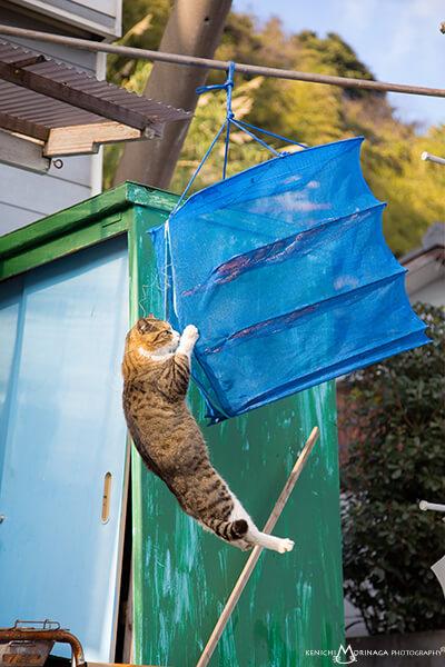 猫写真家・森永健一(モリケン)さんの作品、何とかして魚を手に入れようとする猫