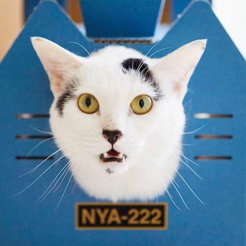 機関車型の猫ハウス全面から顔を覗かせる猫