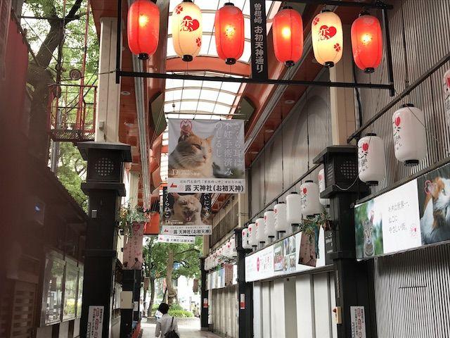 大阪キタ、曽根崎お初天神通商店街アーケードに設置された「さくらねこ」啓発の装飾