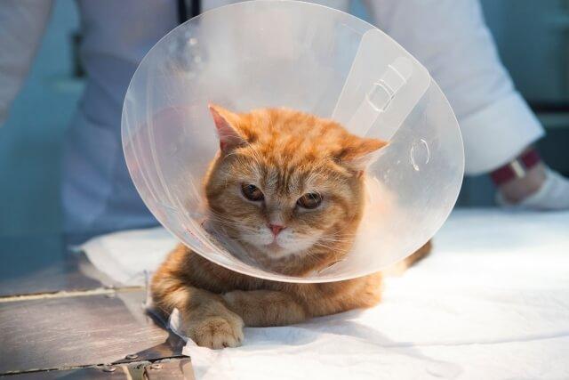 手術を受ける猫のイメージ写真