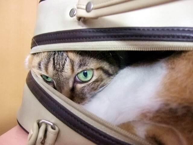 バッグに潜り込んで猫のイメージ写真
