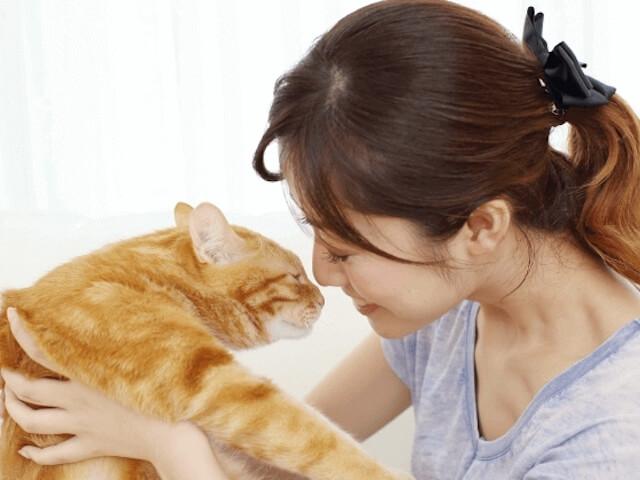 通信講座「猫の育て方アドバイザーW資格取得講座」が新規開講