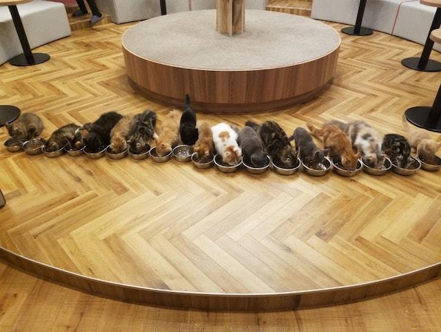 猫が一列に並んだご飯タイムの様子 by 猫カフェMoCHA名古屋店