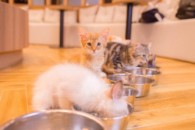 美味しそうにご飯を食べる猫たち by 猫カフェMoCHA名古屋店