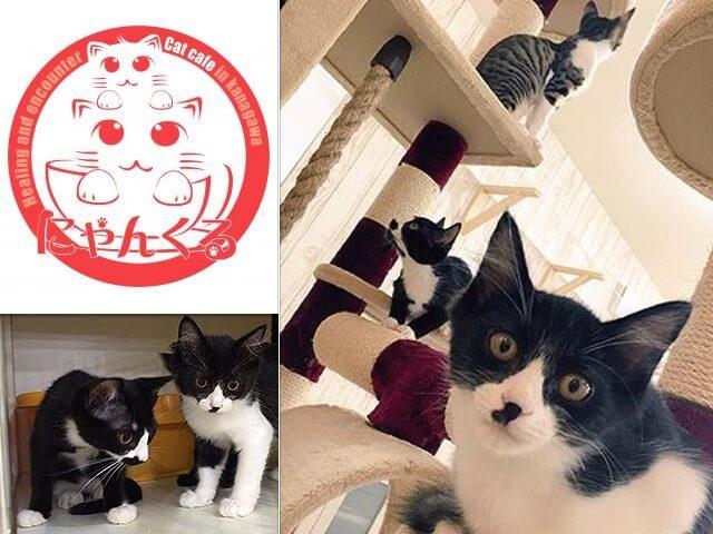 譲渡型猫カフェ「にゃんくる」の3店舗で夏の仔猫祭りキャンペーンが開催中