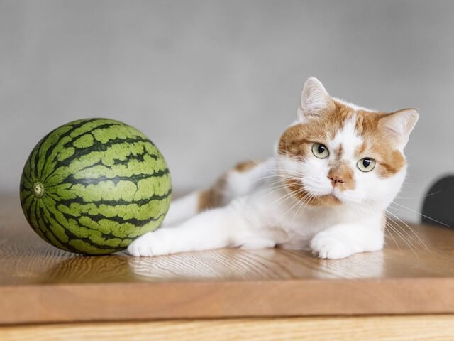Instagramやブログで人気の猫「どんこ」