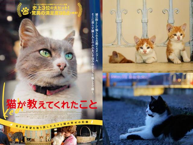 トルコ・イスタンブールの猫ドキュメンタリー映画「猫が教えてくれたこと」