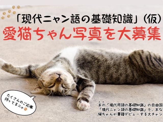 愛猫の写真を募集中!10月出版予定の書籍・現代ニャン語の基礎知識(仮)