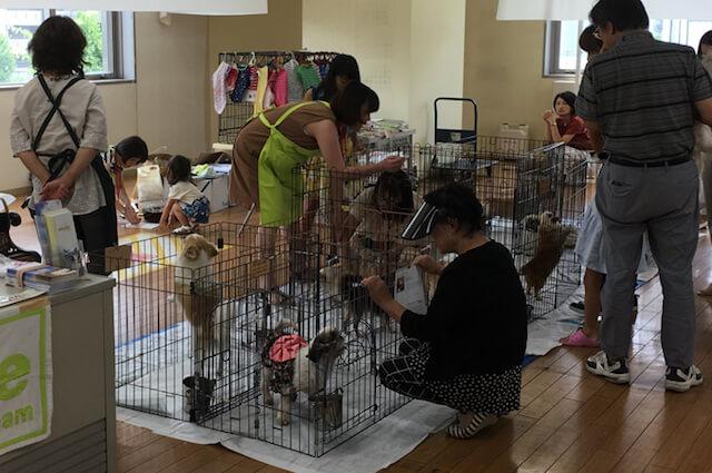 大阪府吹田市・犬猫譲渡会の様子(関西ペット協会協力)