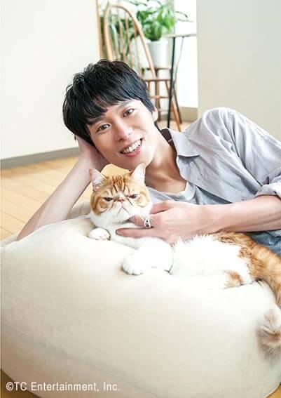俳優「伊勢大貴」×猫「エキゾチックショートヘア」の写真