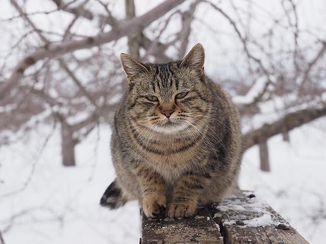 世界ネコ歩き「津軽の四季」雪景色の中に佇む猫