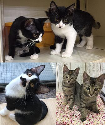 譲渡型猫カフェ にゃんくるで里親募集の猫たち