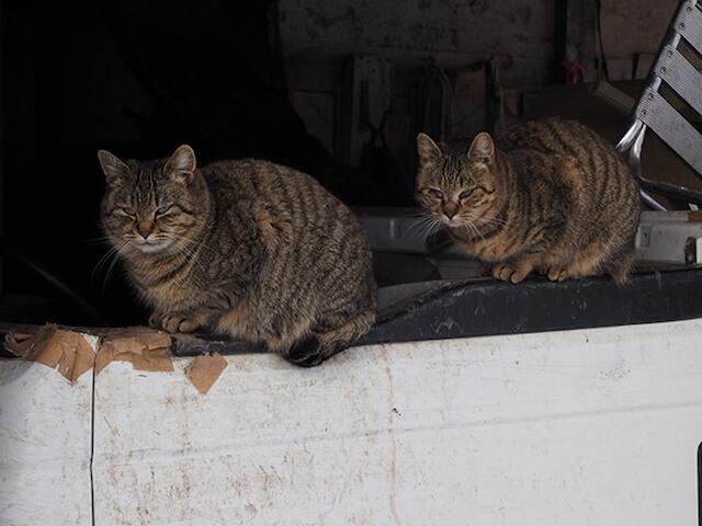世界ネコ歩き「津軽の四季」寒そうに縮こまる猫
