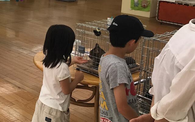 株式会社オルボが主催する犬猫譲渡会の様子2(関西ペット協会協力)