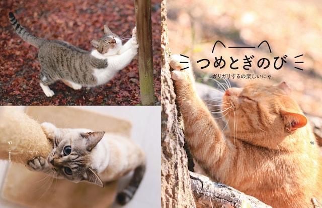 爪とぎのびのポーズ by 書籍「のび猫ストレッチ」