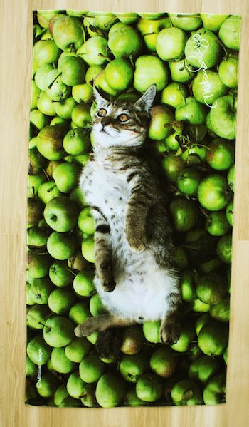 岩合光昭さんが撮影した「リンゴの上で寝転ぶ猫」のビーチタオル