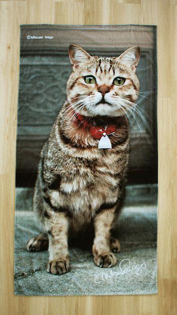 岩合光昭さんが撮影した「長崎県・福江島の猫」のビーチタオル