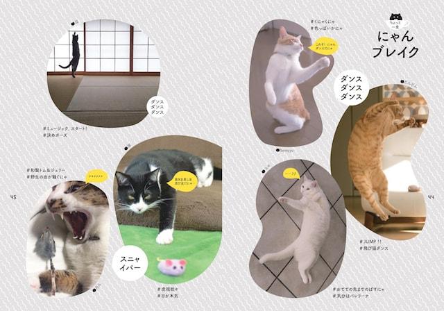 猫の写真が満載なにゃんブレイクのページ by 書籍「のび猫ストレッチ」