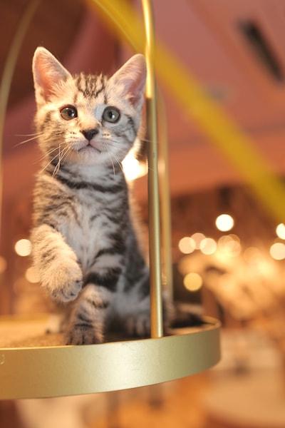 こちらを見つめる猫 by 猫カフェMoCHA名古屋店