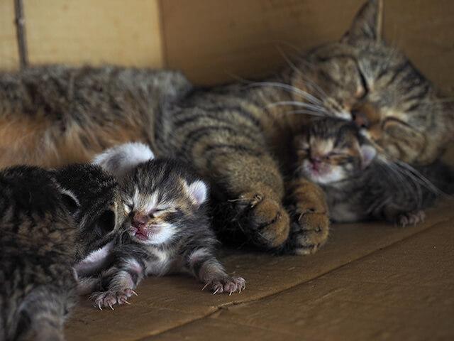 追加撮影した「コトラとその家族」の写真