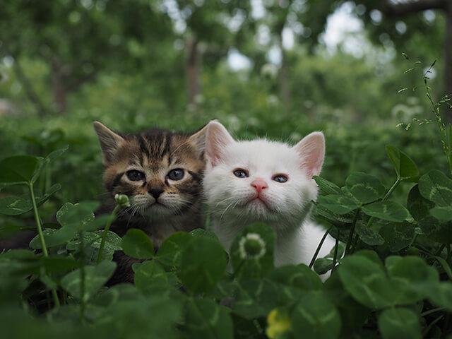 劇場版 岩合光昭の世界ネコ歩き、仲良し子猫