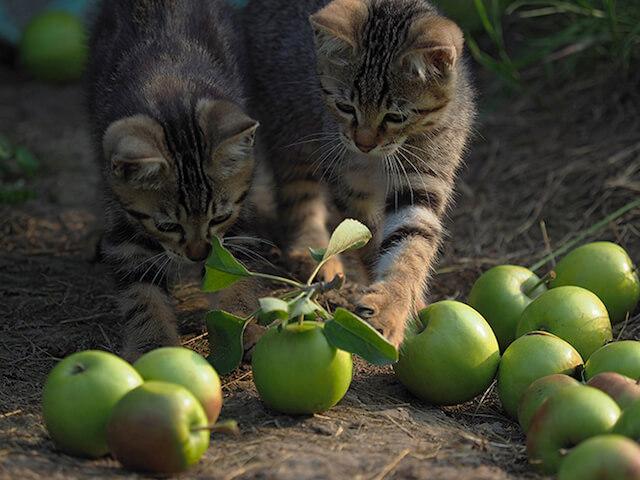 劇場版 岩合光昭の世界ネコ歩き、リンゴとじゃれる猫たち