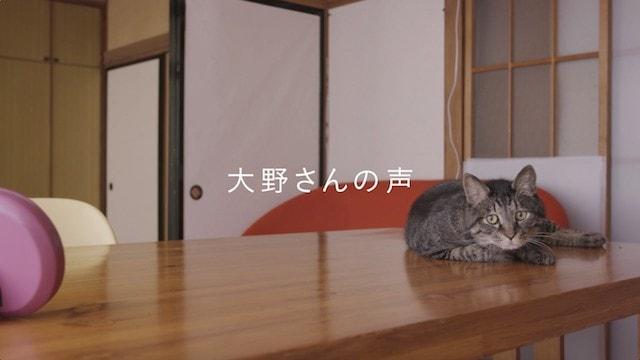 元・飼い主さんである大野さんの声に反応する猫のくうちゃん