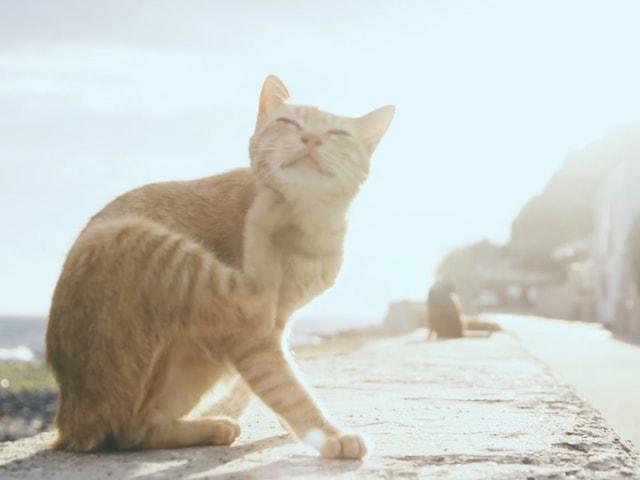 猫島「相島」で撮影したエド・シーランのミュージックビデオが公開