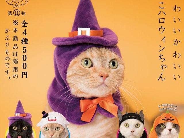 愛猫が魔女やカボチャに変身!猫のかぶりものシリーズにハロウィンが登場