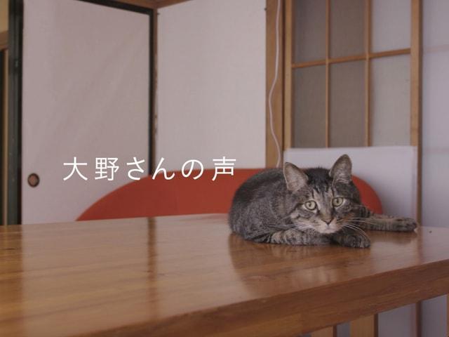 敬老の日記念、カルカンから元飼い主の声に反応する高齢猫のドキュメンタリー動画が公開