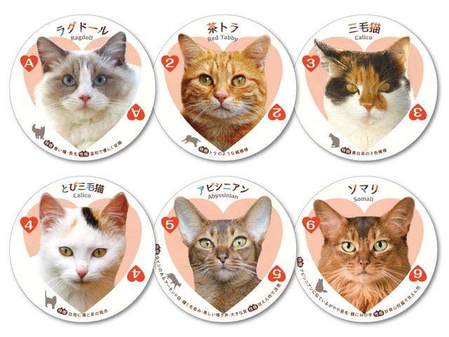 54種類のカードが猫まみれ!猫好きにはたまらない「ねこトランプ」