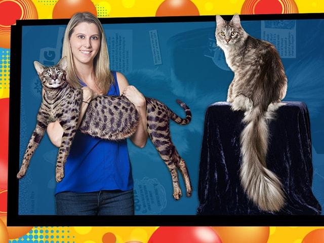 同じ家に暮らす2匹の猫ちゃんが個別にギネス世界記録に認定