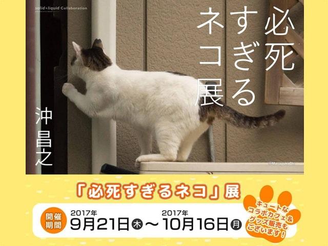 猫写真家・沖昌之さんの写真展が町田で開催中、10/1にはサイン会も