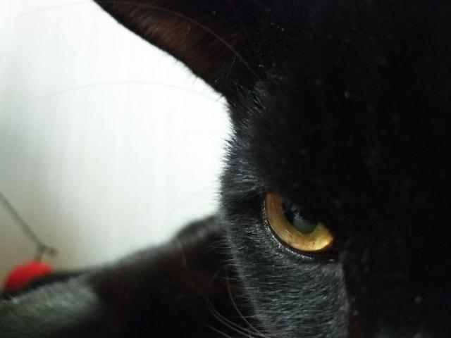 黒猫の写真イメージ(至近距離)