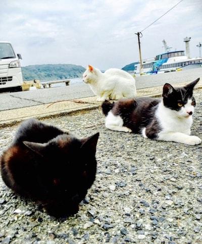 猫島「相島」で暮らす猫たちのイメージ写真