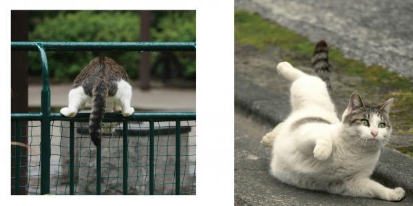 写真集「必死すぎるネコ」に掲載されている必死な表情のネコたち