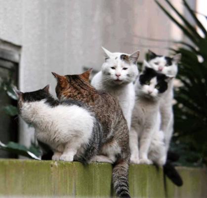 写真集「必死すぎるネコ」に登場するネコザイル